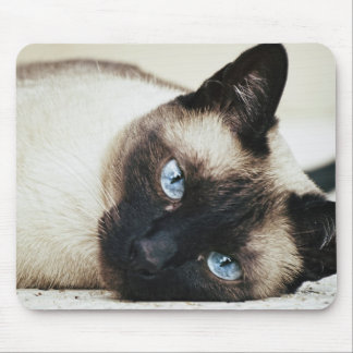 Siamese Cat Mouse Pads