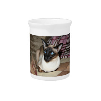 Siamese Cat on couch Drink Pitcher
