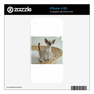 Siamese Cat Pet Purr Meow Kitty Destiny Decal For iPhone 4S