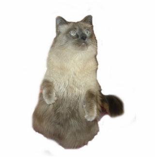 Siamese Cat Photo Sculpture
