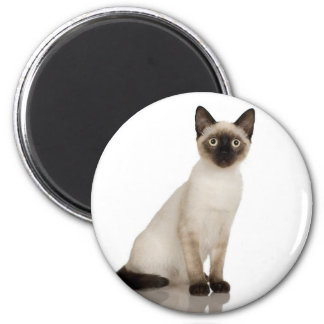 Siamese Cat Photograph Design 2 Inch Round Magnet