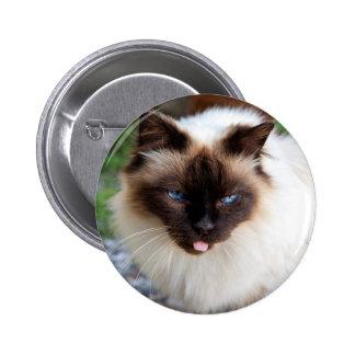 Siamese cat pinback button