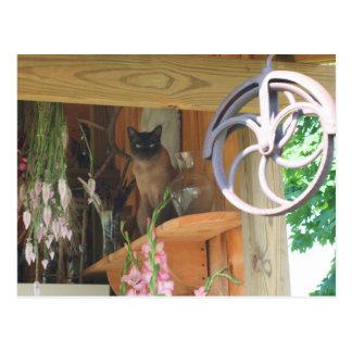 Siamese Cat Posing Animal Photography Postcard #2