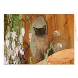 Siamese Cat Posing Photography Card #1