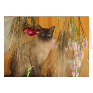 Siamese Cat Posing Photography Card #3