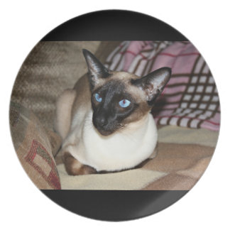 Siamese Cat Relaxing on Couch Dinner Plate