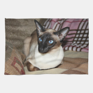 Siamese Cat Relaxing on Couch Towels