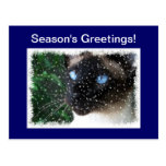 Siamese Cat Season's Greetings Snow Postcard