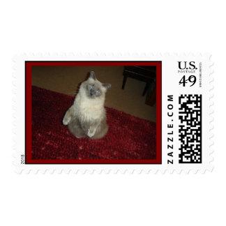 Siamese Cat Sit ups postage