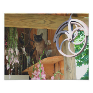 Siamese Cat Sitting On Shelf Animal Poster