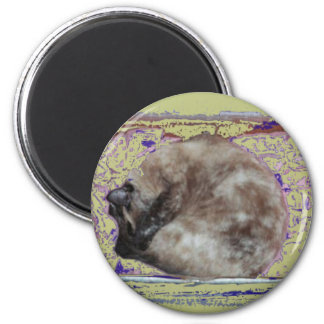 Siamese Cat Sleeping in Box Photo digital effects 2 Inch Round Magnet