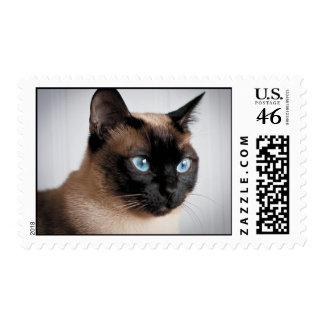 Siamese Cat Stamp