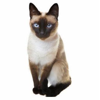 Siamese cat standing photo sculpture