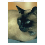 Siamese Cat Stationery Note Card