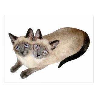 Siamese Cat Twins Postcard