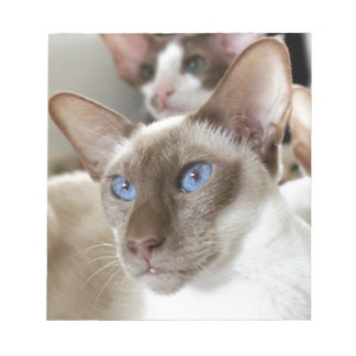 Siamese  Cats Pets Animals Notepad
