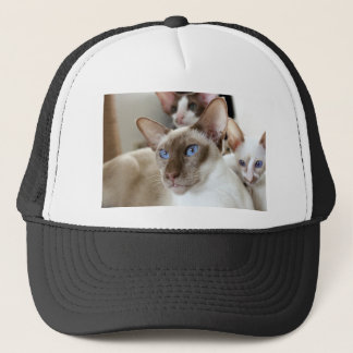 Siamese  Cats Pets Animals Trucker Hat