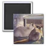 Siamese Cats Two at Window (2) 2 Inch Square Magnet