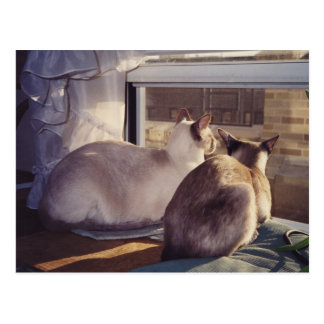 Siamese Cats Two at Window (2) Postcard