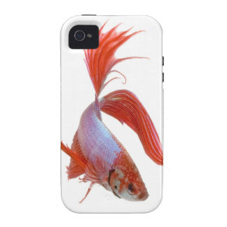 Siamese fighting fish Betta splendens Vibe iPhone 4 Cases