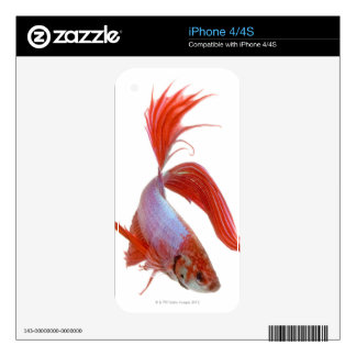 Siamese fighting fish (Betta splendens) Decal For The iPhone 4S