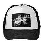 Siamese fighting fish- Betta splendens Hats