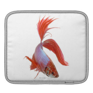 Siamese fighting fish (Betta splendens) iPad Sleeve