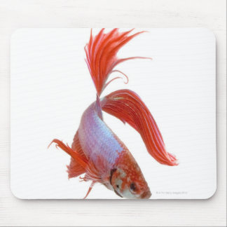 Siamese fighting fish (Betta splendens) Mouse Pad