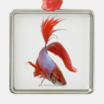 Siamese fighting fish (Betta splendens) Ornaments