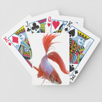 Siamese fighting fish (Betta splendens) Bicycle Playing Cards