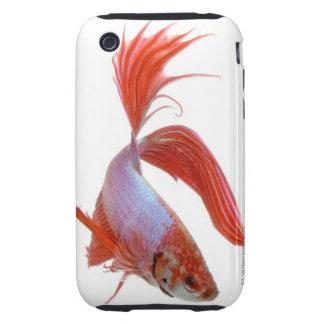 Siamese fighting fish (Betta splendens) Tough iPhone 3 Cover