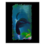 Siamese Fighting Fish Posters