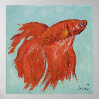 Siamese Fighting Fish Print