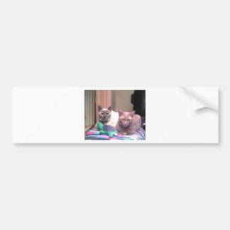 Siamese Himalayan Tabby Abysinnian Cat Kitty Gift Bumper Stickers