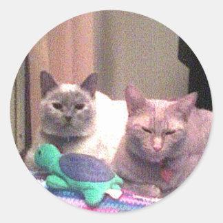 Siamese Himalayan Tabby Abysinnian Cat Kitty Gift Classic Round Sticker