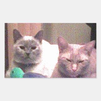 Siamese Himalayan Tabby Abysinnian Cat Kitty Gift Rectangular Sticker