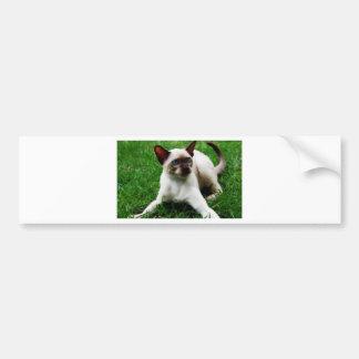 Siamese in the grass bumper sticker