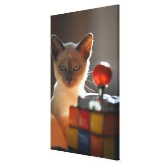 Siamese kitten 2 canvas print