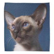 Siamese Kitten Bandana