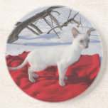 Siamese Kitten in Snow - Lilac Point Cat Coaster