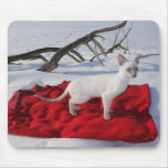Siamese Kitten in Snow - Lilac Point Cat Mouse Pad