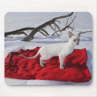 Siamese Kitten in Snow - Lilac Point Cat Mousepad