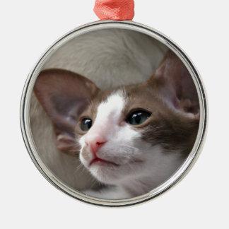 Siamese Kitten with big ears Metal Ornament
