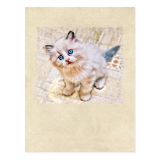 Siamese Kitten with Soulful Blue Eyes Postcards