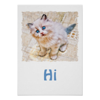Siamese Kitten with Soulful Blue Eyes Poster