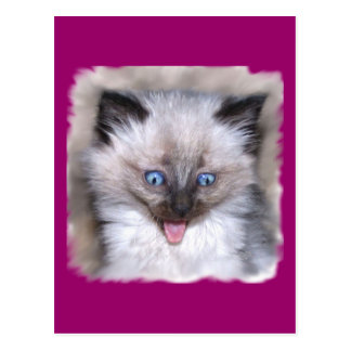 Siamese Kitten With Tongue Out Postcard