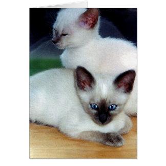 Siamese Kittens Card