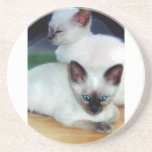 Siamese Kittens Coaster