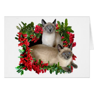Siamese Kittens in Berry Frame Cards