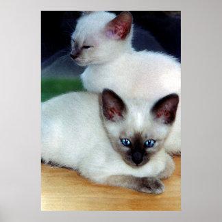 Siamese Kittens Poster